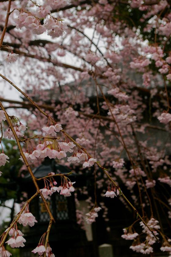 hongakuji.IMGP3791.jpg