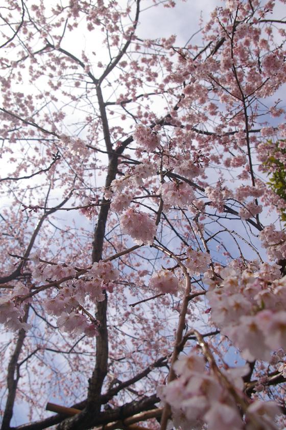 hongakuji2.IMGP3818.jpg